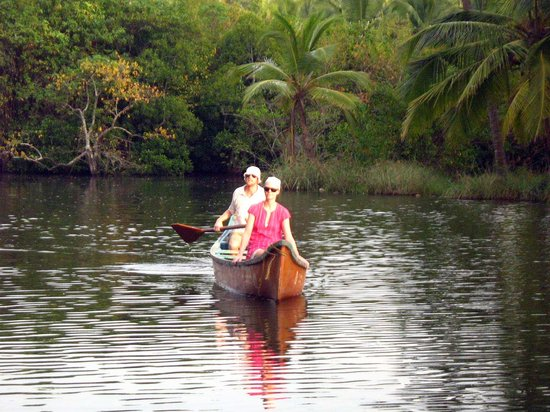 Kannur Beach House: Canoeing in the river, birds and mangroves