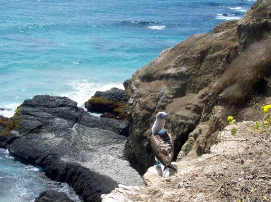 Maremonti B&B: A Visit To Puerto Lopez