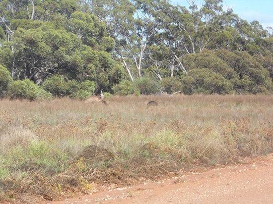 Fraser Range Station: bush views from camp ground