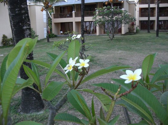 C Palmar Mauritius: camere nel verde con vista