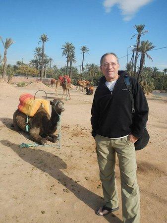 Hotel Riu Tikida Garden : le chameau et moi...ont réfléchies...