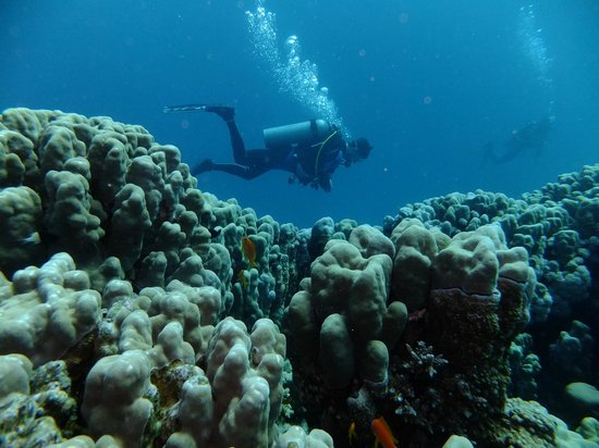 Roots Luxury Camp : House reef and diver