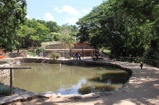 Fazenda do Chocolate : Lago com muitos peixes e patos