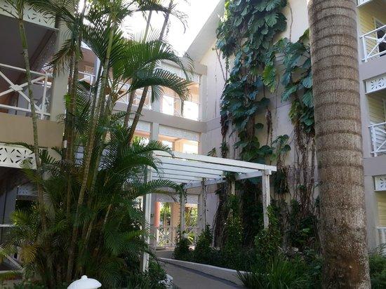 Vista Sol Punta Cana : Galerías de Acceso a las habitaciones