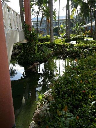 Vista Sol Punta Cana : Estanque con peces y tortugas marinas cercano al area de habitaciones