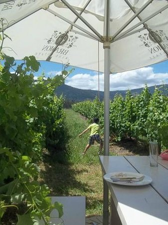Bramon Wine Estate: Taken from our table