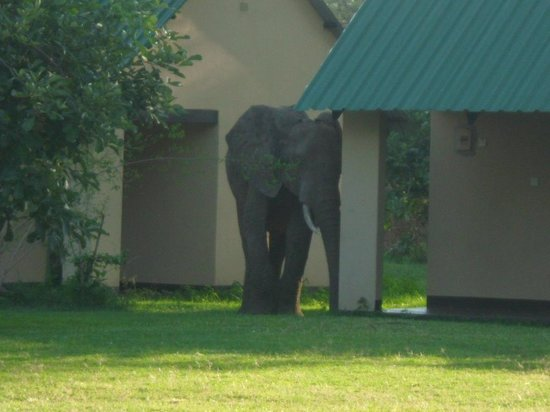 Marula Lodge : lucky enough to see elephants in your own garden. very special