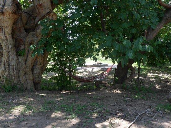 Marula Lodge: hammock time