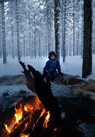 Lapland Hotel Akashotelli: Reindeer & Husky Sledging