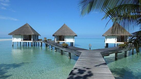 Gangehi Island Resort: Bungalow sul mare