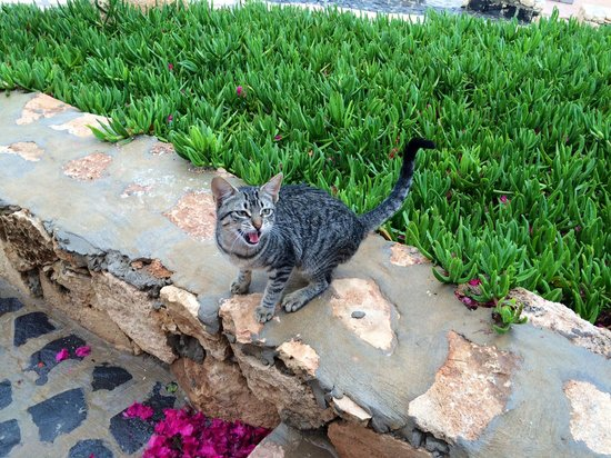 Royal Horizons Boa Vista : Hotel has some pets