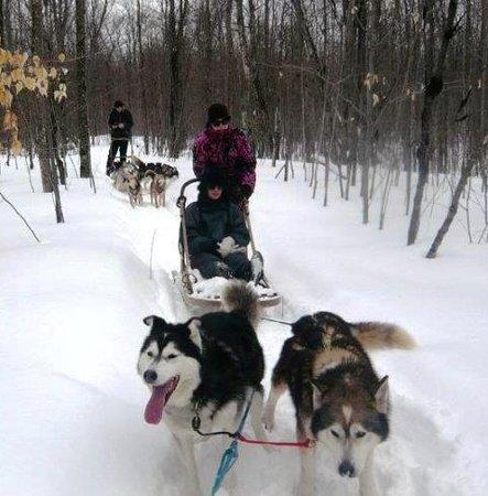 Quiet Bay Log Motel & Cafe: Dog sledding