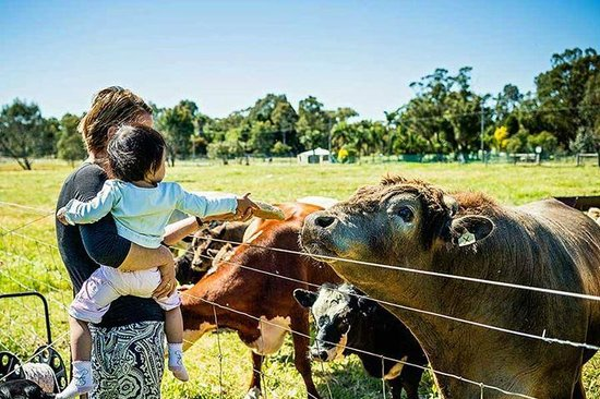 Kellers Bed & Breakfast: Feeding cows bread