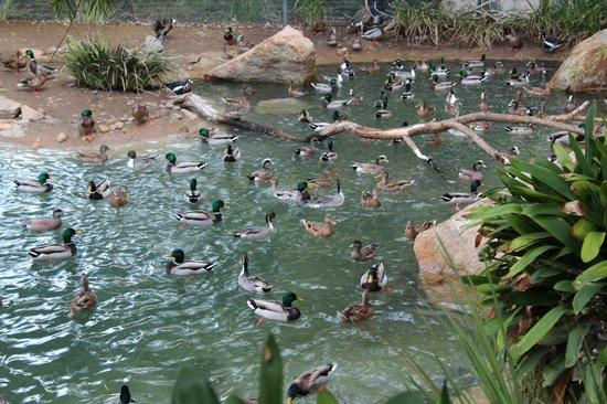 Restaurants Near San Diego Zoo Safari Park