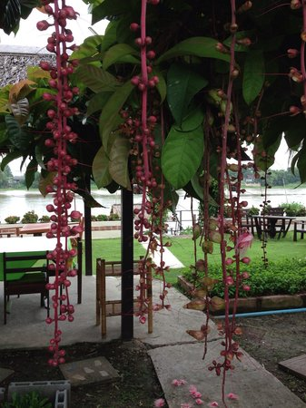 Ayutthaya Garden River Home : Jardin