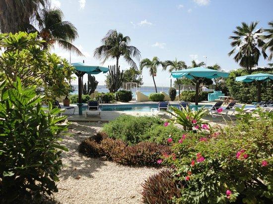 Bonaire Oceanfront Apartments: tuin en zwembad