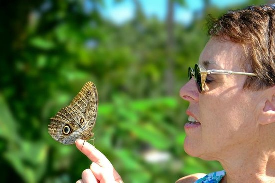 The Butterfly Farm (La Ferme des Papillons): Up close and personal