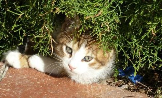 Titanic Beach Lara Hotel: Süße Katzen gehören zum Hotel