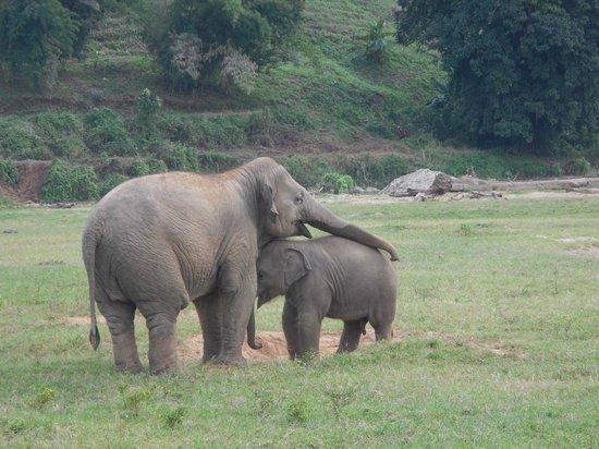 Elephant Nature Park Amex