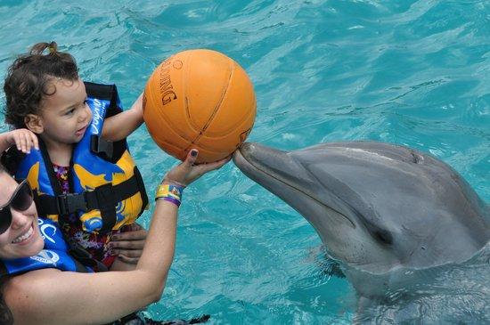 Dolphin Discovery Isla Mujeres : Nado com golfinhos