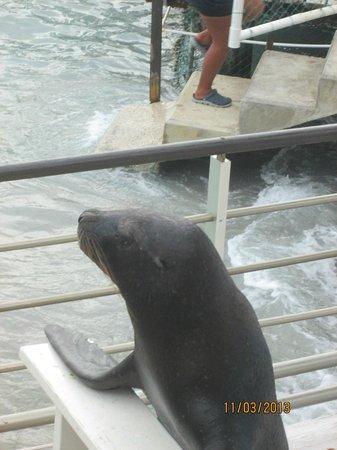 Dolphin Discovery Isla Mujeres : Leão Marinho