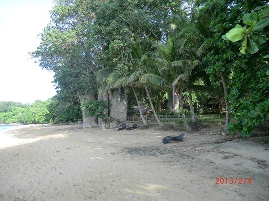 Le Jardin Maore: plage de l'hotel