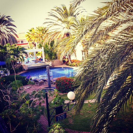 LD Palm Beach: La piscina desde  mi hab