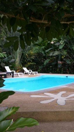 Vipa Tropical Resort: Den rena fina poolen ligger inbäddad i grönska!