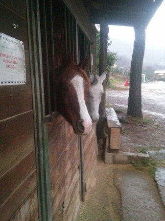Tambor: Cavalli all'esterno