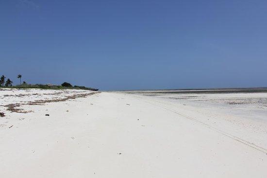 Jacaranda Beach Resort : Spiaggia