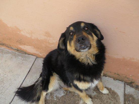 """Homestay Bertha Sucre : Der Hund """"Coco"""""""