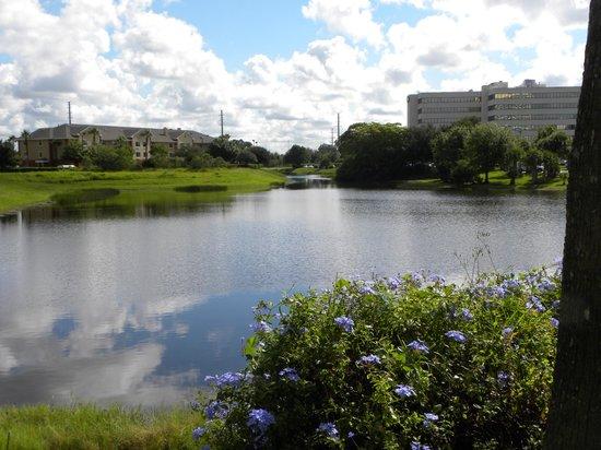 Doubletree By Hilton at the Entrance to Universal Orlando : con vista a un lago y piscina...