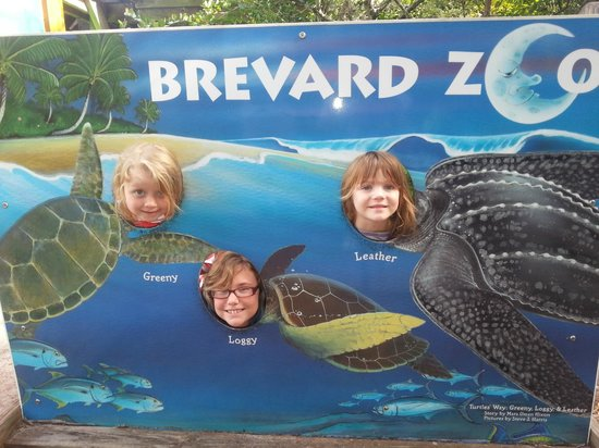 Brevard Zoo: Our cute turtles at the zoo