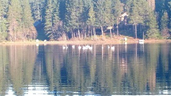 Lakedale Resort at Three Lakes: Swans at Lakedale Resort