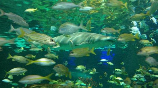 Ripley's Aquarium Of Canada: so beautiful