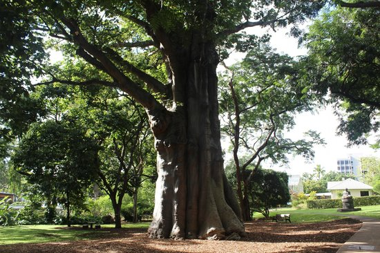 Baobab tree africa picture of foster botanical gardens honolulu tripadvisor for Foster botanical garden honolulu