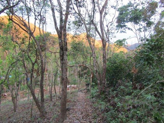 Busuanga Island Paradise: grounds