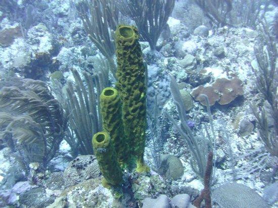 Sea Sports Belize : Colorful sponges