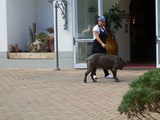 Hotel Oasi Olimpia Relais: Carmen and Her Dog