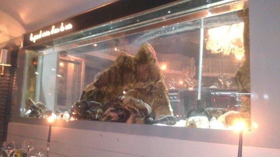 Le Bar a Huitres Montparnasse: Aquarium