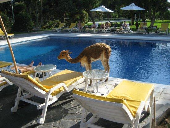 Hotel Majoro: Pool area