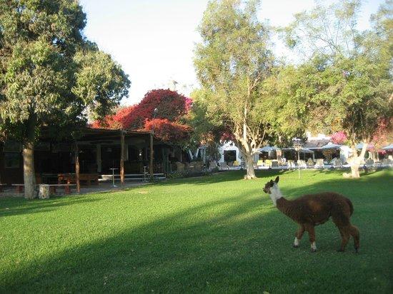 Hotel Majoro : Garden