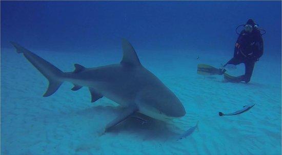 Always Diving & Water Sports: Bull Shark dive Dec 26, 2013