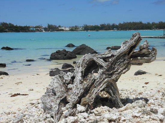 Asso Villa: Isola dei Cocchi