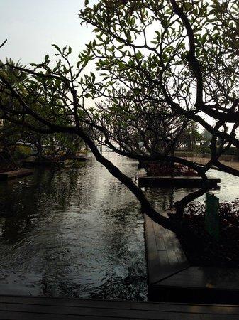 Dusit Thani Hua Hin: Lagoon