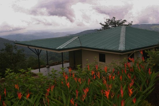Vista Valverde Bed & Breakfast: Walking above Palm Cabin on a rainy day, all flowers in bloom!