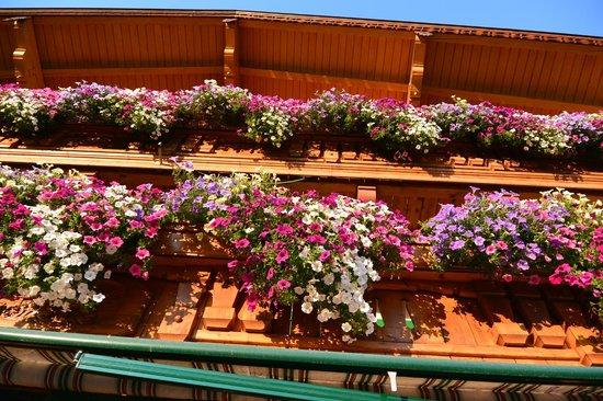 Stallerhof Bed & Breakfast : wunderschöne Balkonblumen