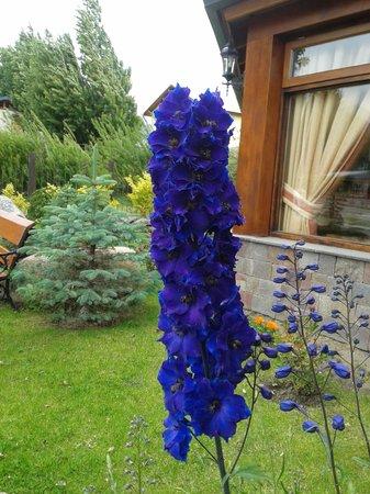 Patagonia Queen: Flor en la recepción del hotel
