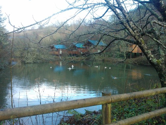 Forest Holidays Deerpark, Cornwall: Cabins beside the lake