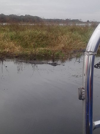 Big Toho Airboat Tours: gator
